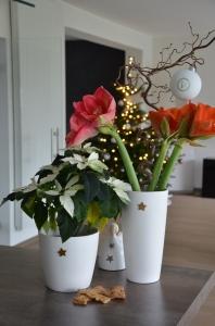winterblumen_deci1